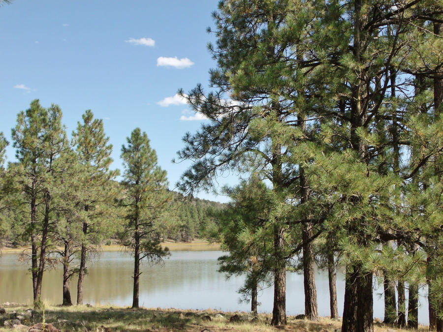 Kaibab lake williams arizona by speck2 on deviantart for Fishing in williams az