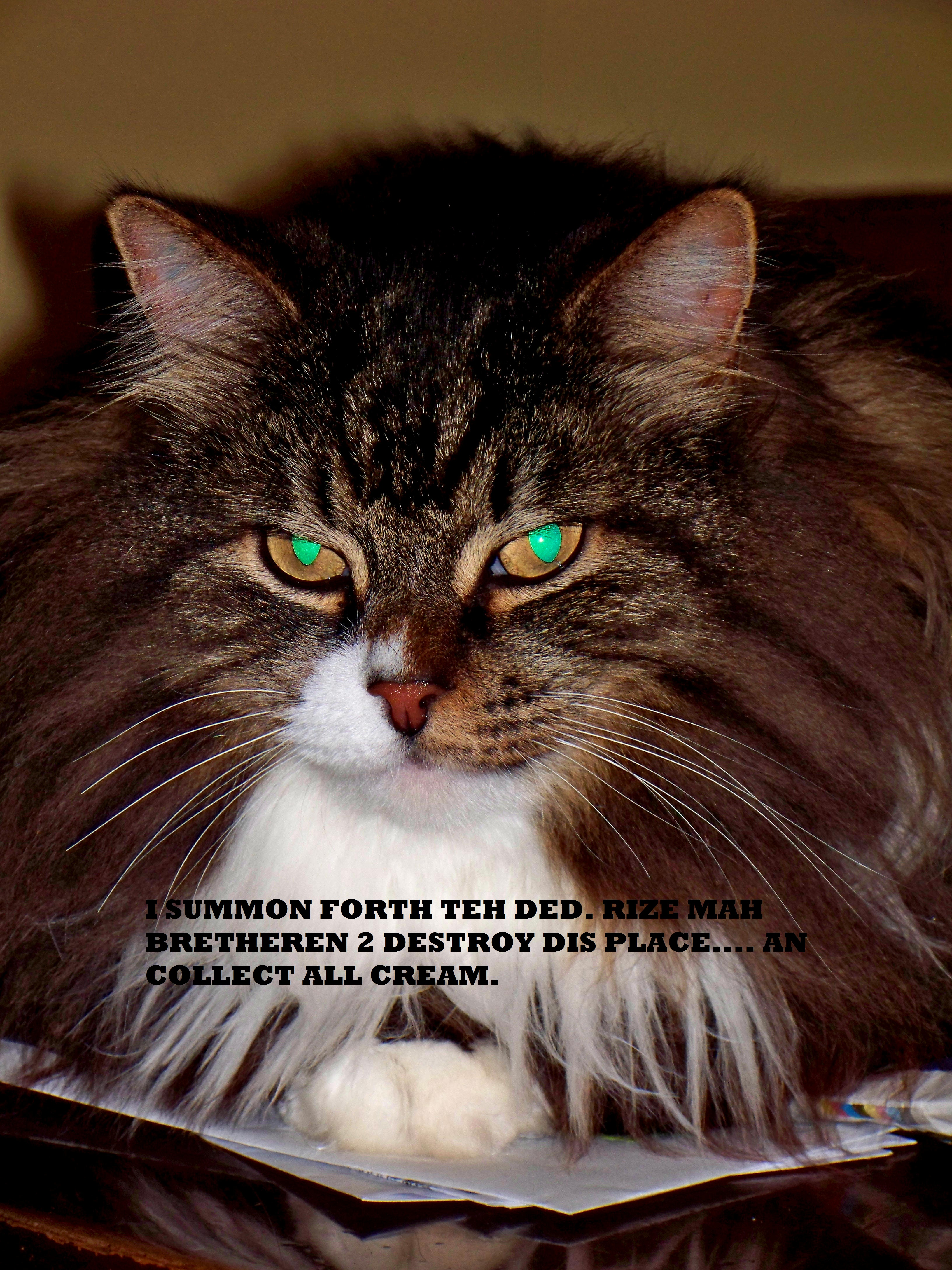 lolcats entry 008 by wolfpack5554 on deviantart