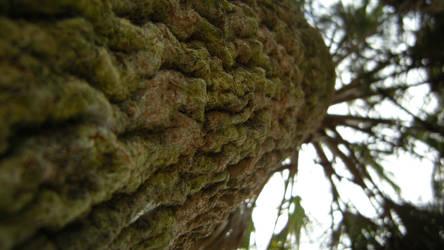 Up the Adirolf Tree