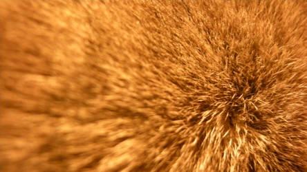 Furry Void