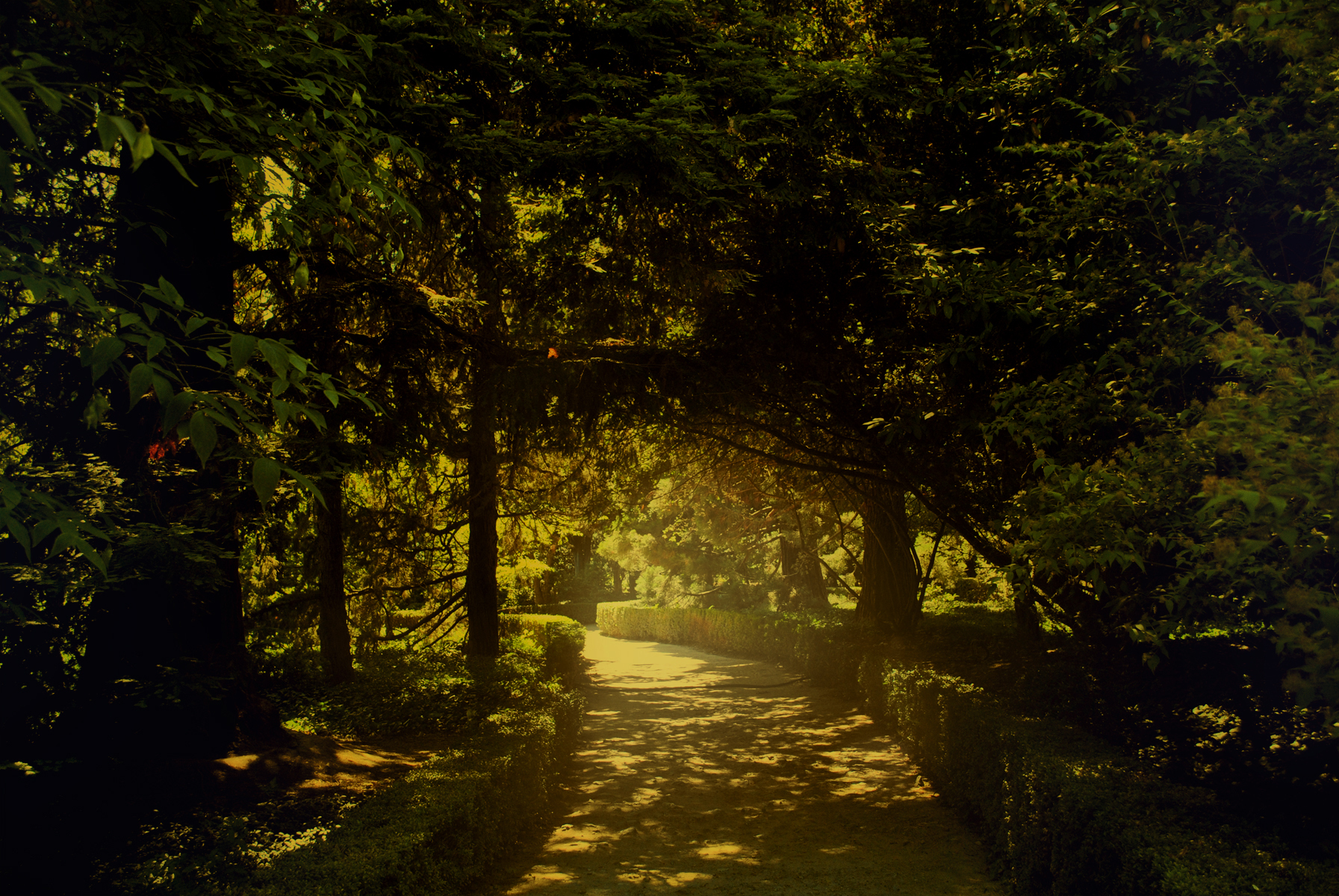 Description Magical_garden_by_fantazyme-d5345x6