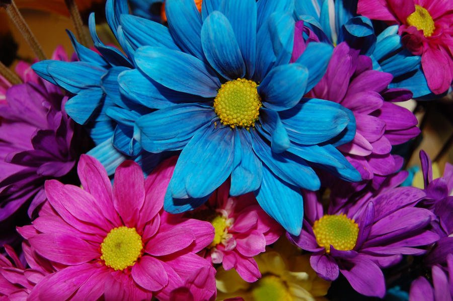 Stock 490 unique flowers by pink stock on deviantart for Which of these is unique to flowering plants