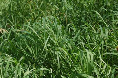 Stock 562 - Grass