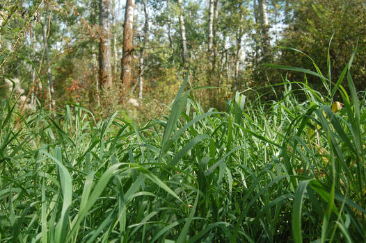 Stock 563 - Grass
