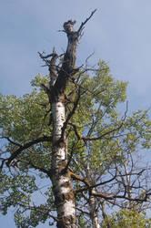 Stock 569 - Tree