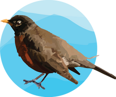 Practice 2, A bird