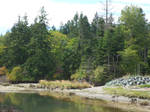Scenic Creek