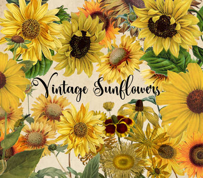 Vintage Sunflower Clipart by DigitalCurio