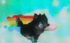 Nyan pup on Gaia by TwilightDragon01