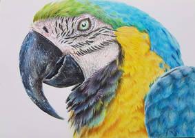 Papuga - kredki Colorino artist