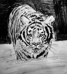 Tiger by njgp
