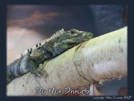 Do Not Disturb by jerseybrat