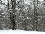 Snowy Morning by jerseybrat