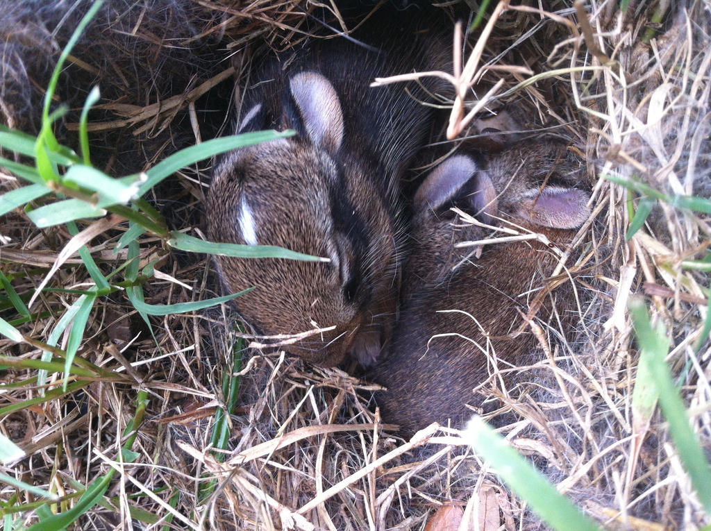 baby bunnies in our backyard! by Hollygoesmeow on deviantART