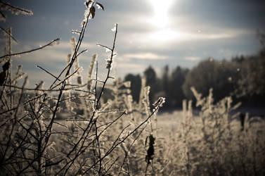 Iced plants 2 by SchmiedeTraum