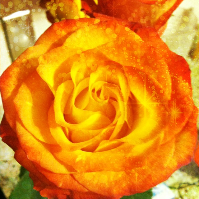 Fire Rose by koda-sohma