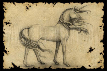 Unicorn by siffert