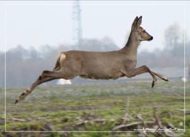 Look at me, I'm flying. by PaulaDarwinkel