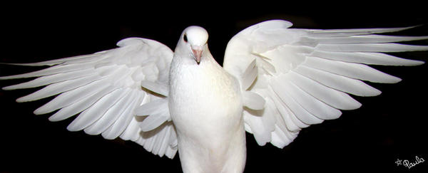 Spread Your Wings by PaulaDarwinkel