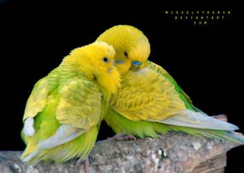 Kiss by PaulaDarwinkel