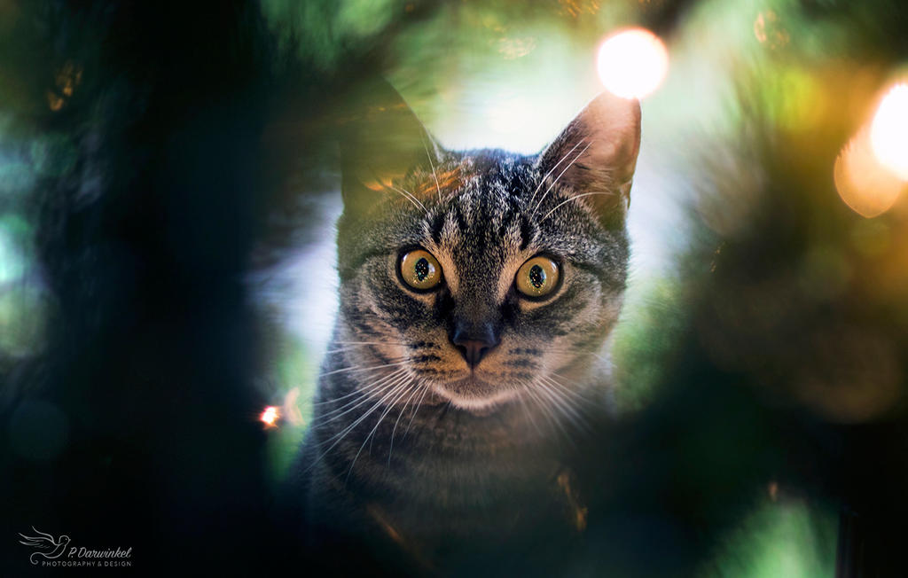 Through the christmas tree by PaulaDarwinkel