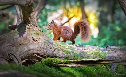 Red Squirrel by PaulaDarwinkel
