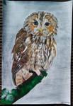 Owl by Effy-Merillis