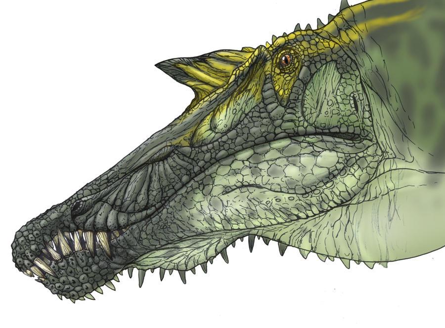 spinosaurus face by fafnirx on deviantart