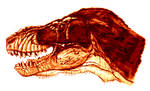 The head of T rex