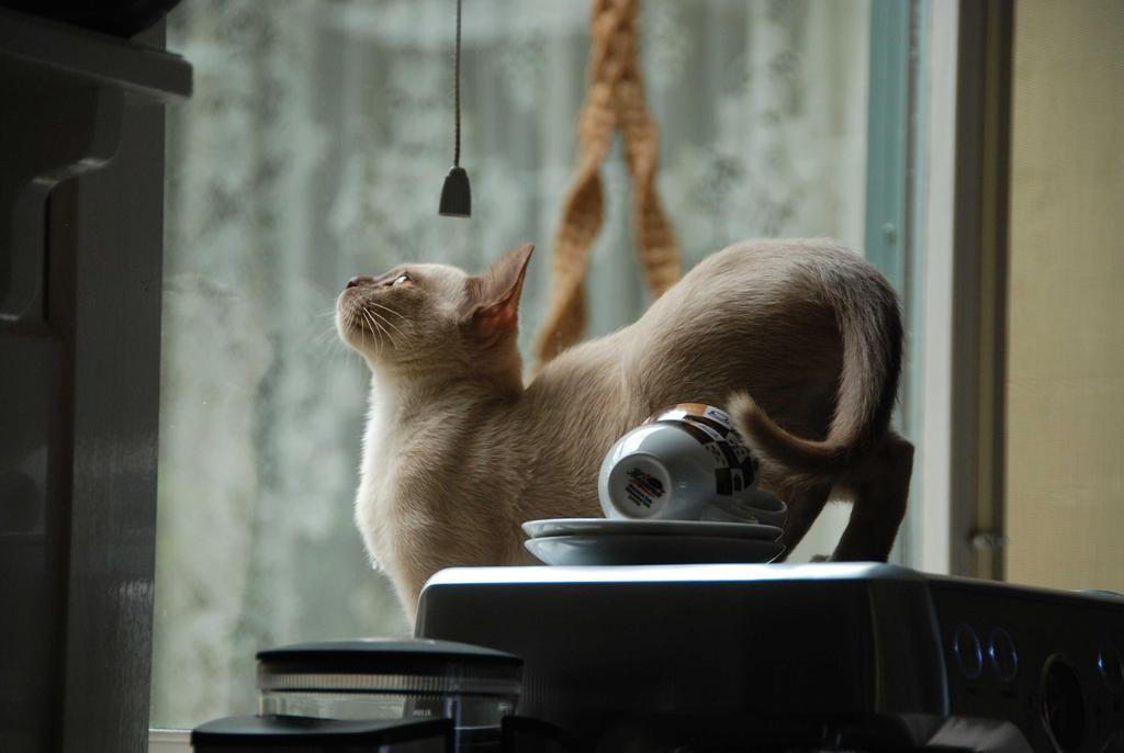Chanel, bird spotting