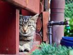 Photo #452 - Kot / Cat