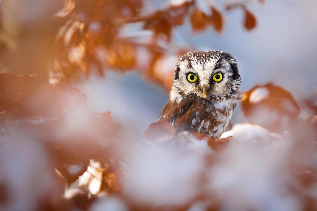 Perching Owl by AlesGola