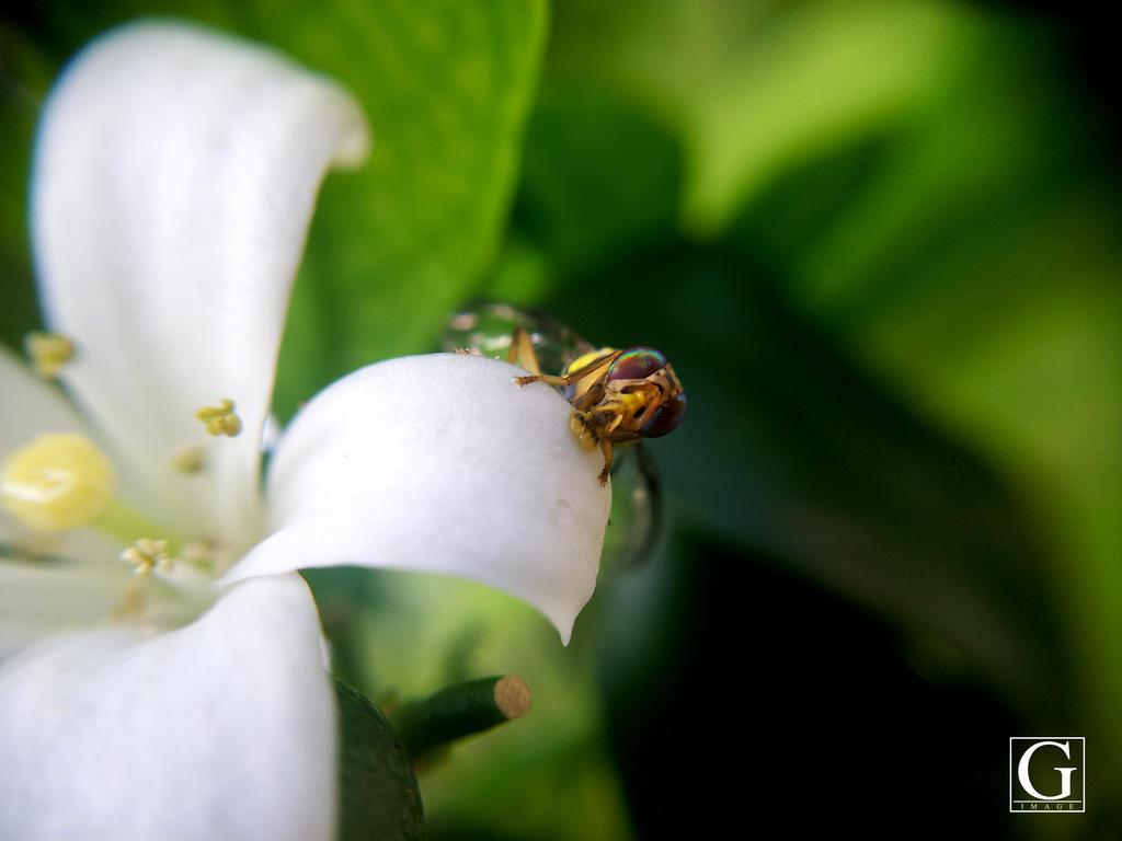 Macro Bee Shoot by Ronaldwei