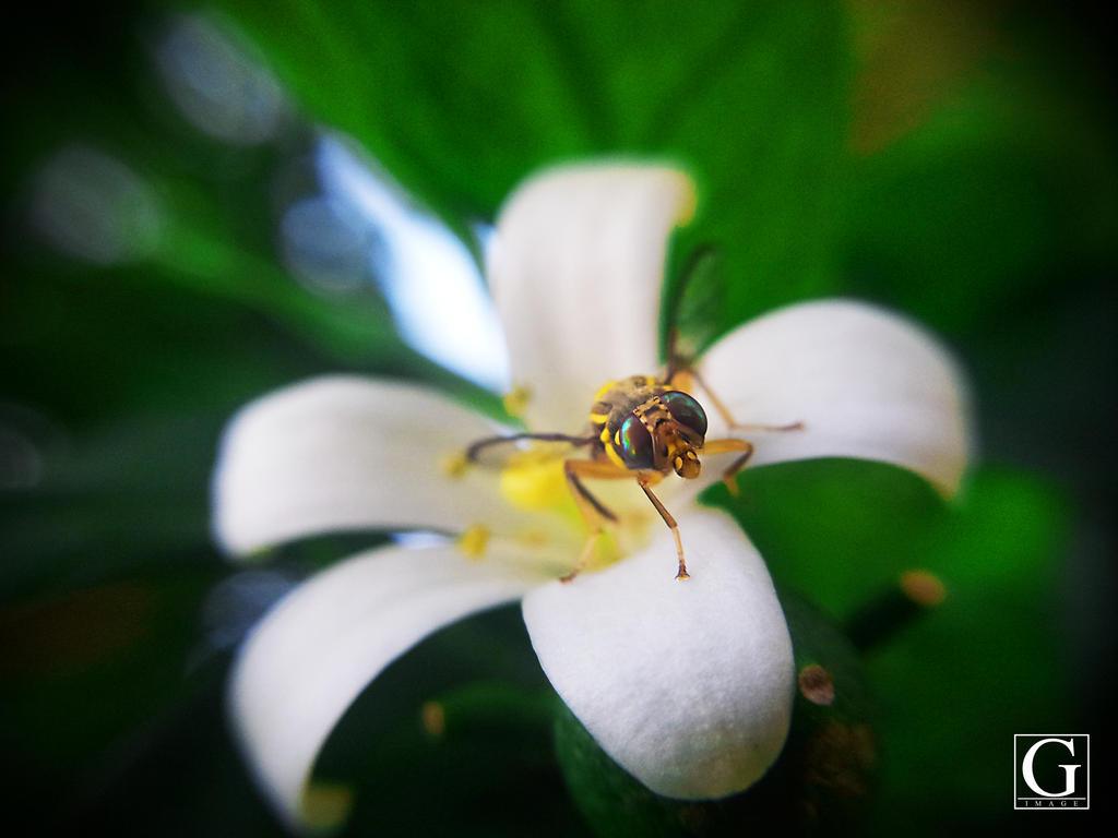 Macro Bee Shot by Ronaldwei