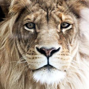 sherdor's Profile Picture