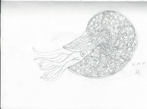 Zentangle nautilus