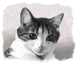 Charcoal style pet portrait by drawmyface