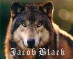 jacob black by love27