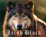 jacob black by love27