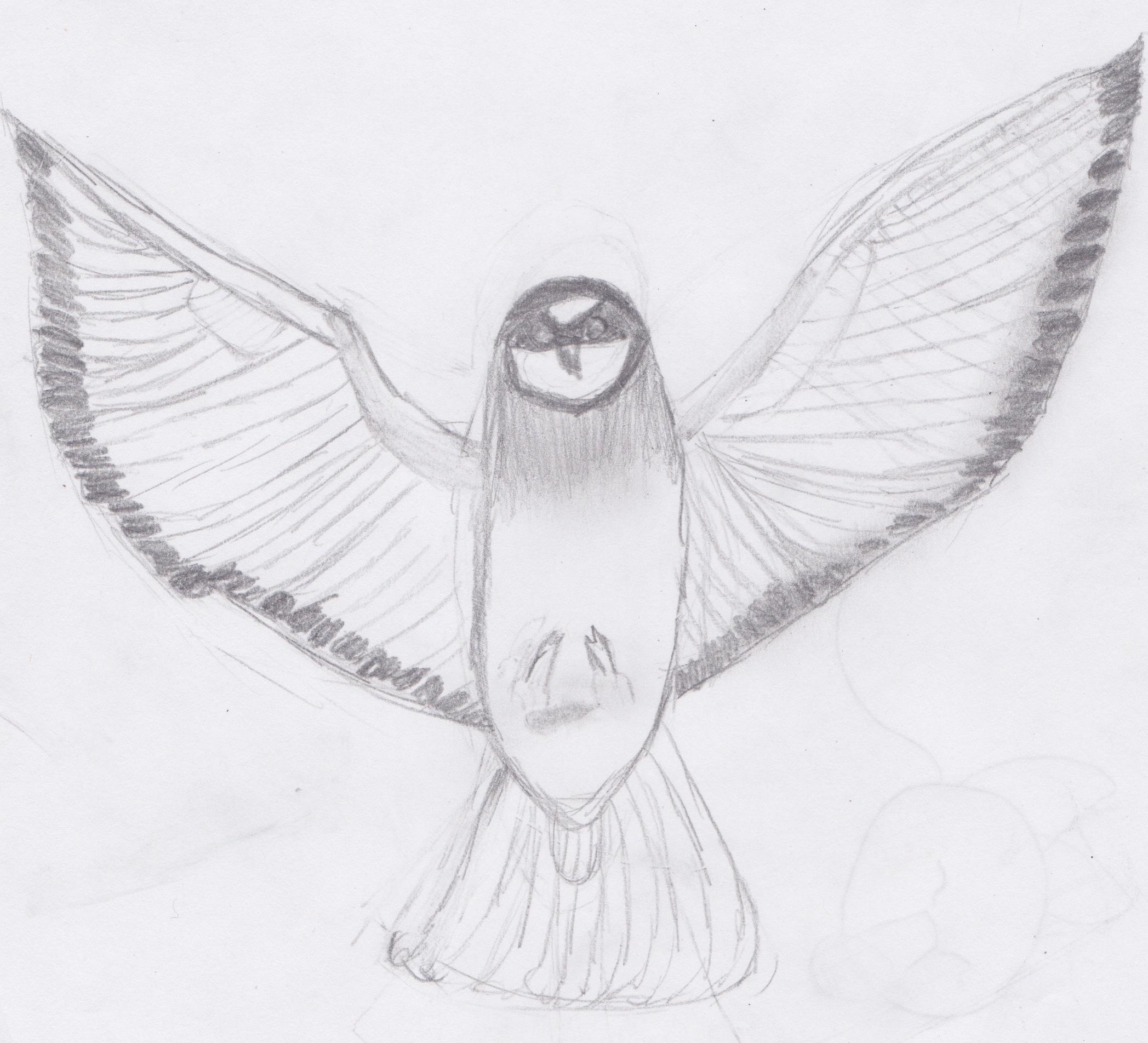 bird pencil sketch by subjectmatters on deviantart