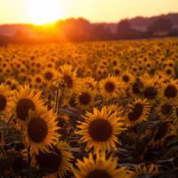 Solar fields by Gundross