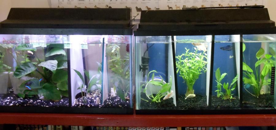 New betta setup by darkmoon17 on deviantart for How to setup a betta fish tank