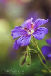 Purple Flower by Estelle-Photographie