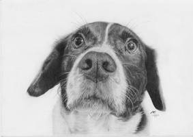 Curious Dog Graphite by Kalgoras
