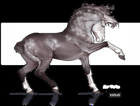 Horse Adoptable 19 - OPEN