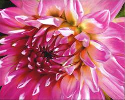 Pink Flower by SoCalPainter