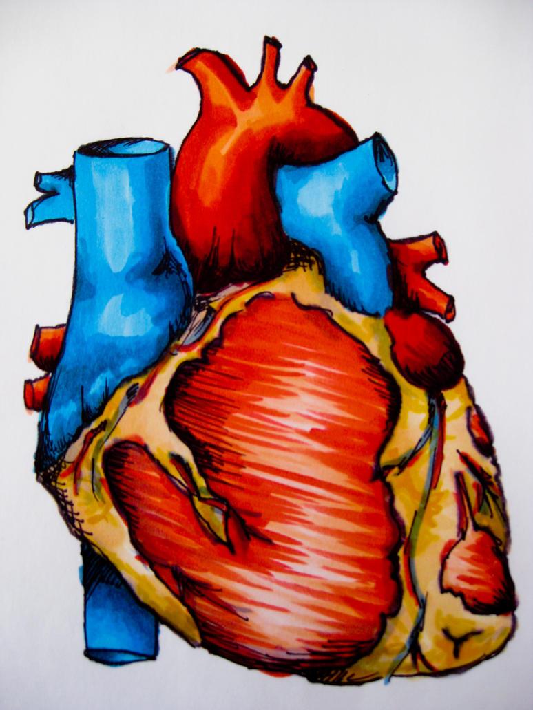 Human Heart by ReminiscentRain on DeviantArt