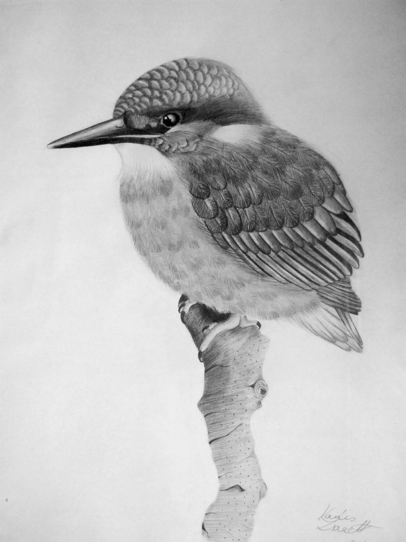 Kingfisher by Zeroxy92