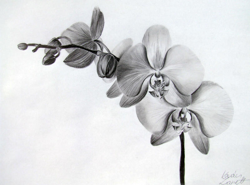 Orchid by zeroxy92 on deviantart - Orchideen tattoo vorlage ...