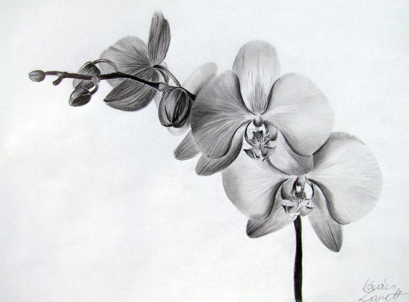 Orchid by Zeroxy92 on DeviantArt  Orchid by Zerox...